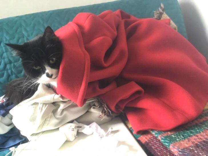 寒さも本番、ラミーもコートはおってます、なんちゃって❤︎