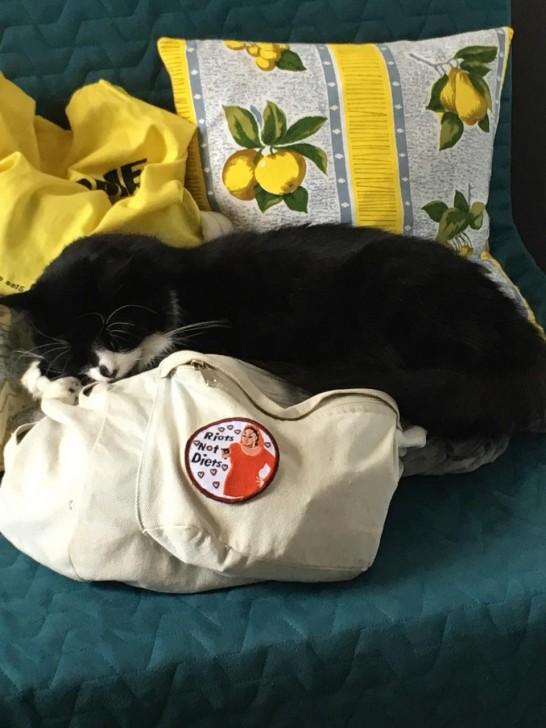 いかにも猫らしく、モノの間に挟まって寝るの好きですね