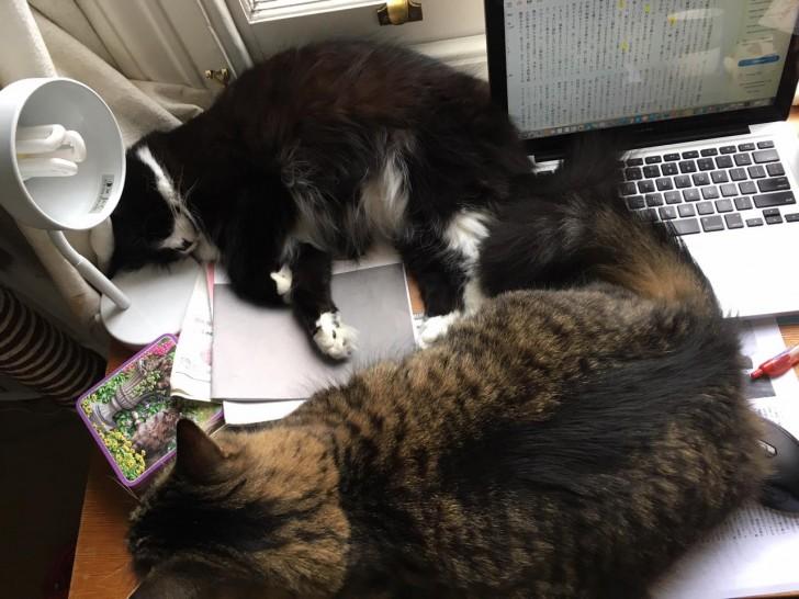 ほかにいっぱい寝るとこあるだろーに。全然仕事できません