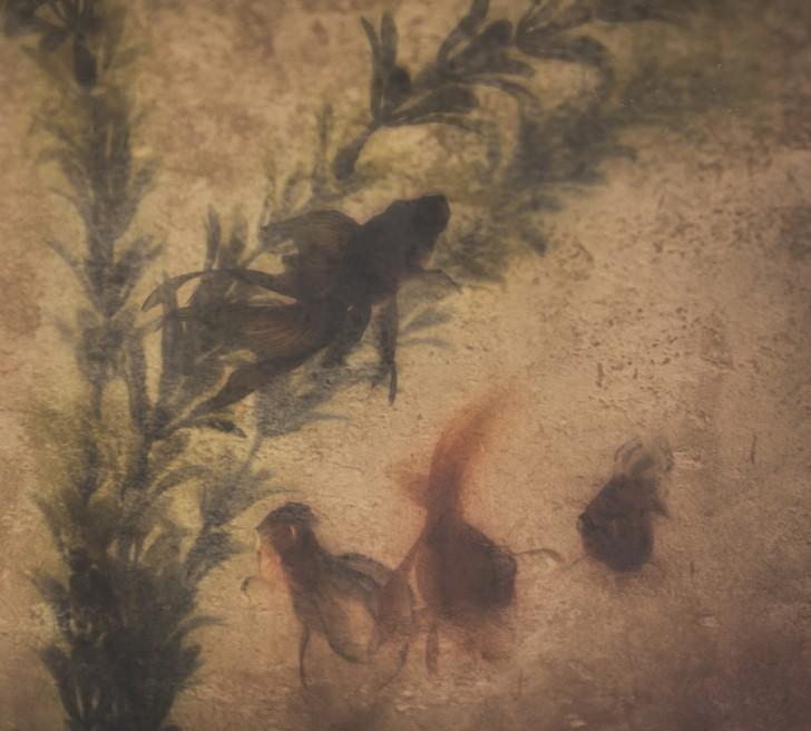 nemoroberts-fineart-london-goldfish
